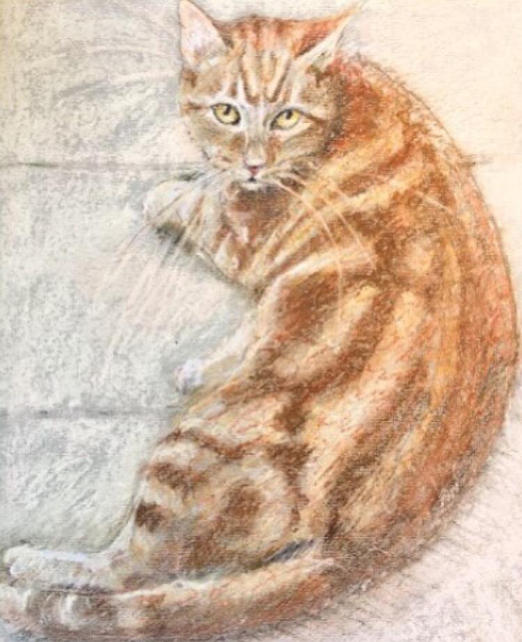 Pastel drawing cat