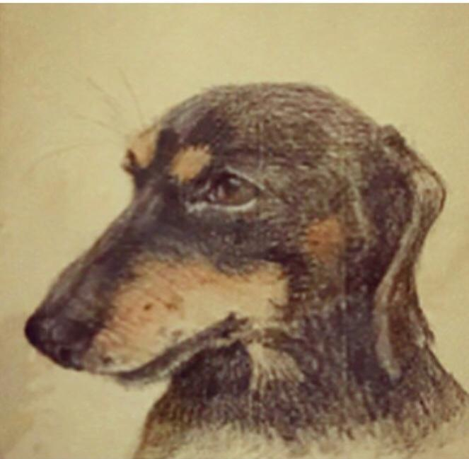 Dachshund dog in pastel