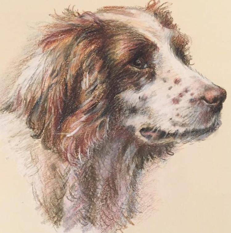 Springer dog in pastel