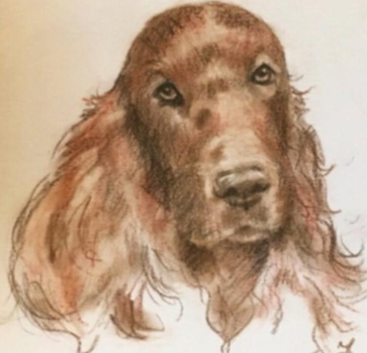 Red setter dog in pastel