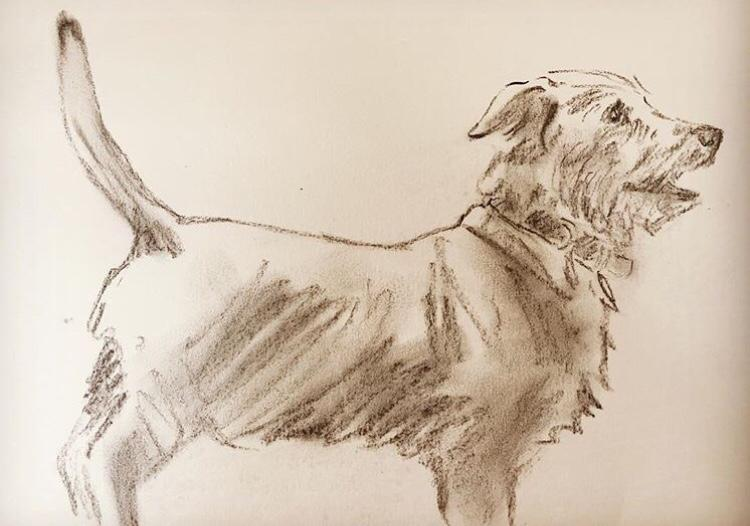 Pastel drawing of terrier dog