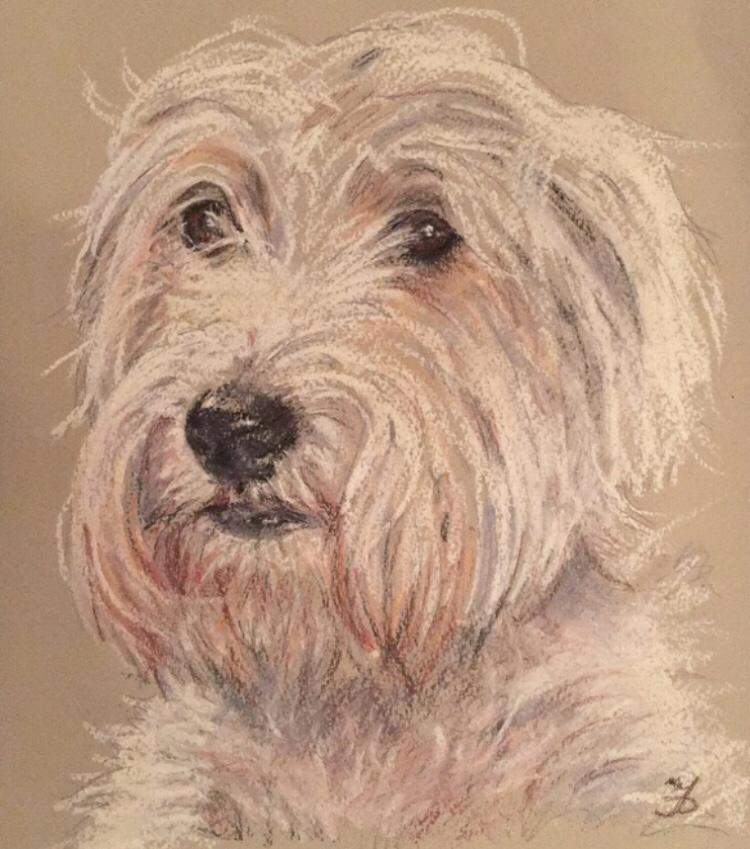 Pastel drawing of Daisy dog