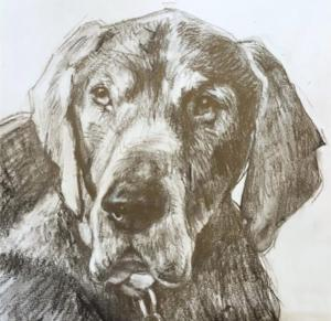 Charcoal dog complete