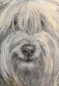 Hairy dog pencil drawing